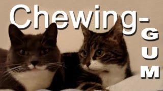 LE CHEWING-GUM - PAROLE DE CHAT