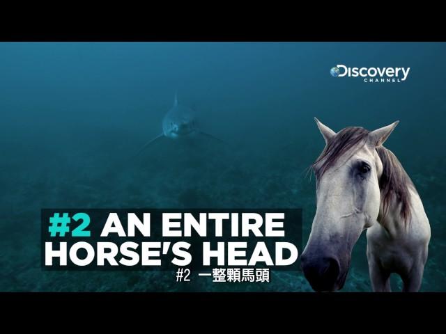 Discovery頻道: 鯊魚的詭異菜單 --《鯊魚週2017》7月24日 ~ 7月30日,每晚8點首播。