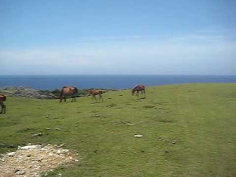 馬鼻崎の日常。与那国馬の家族。
