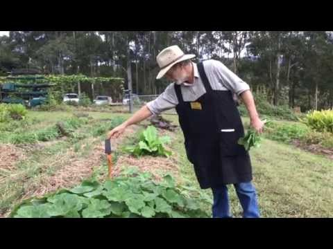 Wiccawood organic farm tour