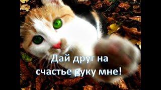 Смешные шустрые Котики ВПЕРЕД! Приколы с Котами 2017  Всем по котику Забавное видео
