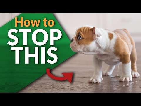 stop-your-puppy-from-peeing-inside!
