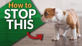Stop your Puppy From Peeing Inside! | Ultimate Pet Nutrition - Dog Health Tips