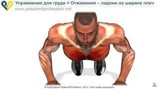 Как ПРАВИЛЬНО отжиматься, отжимания от пола - видео!!!!! Реакция мышц на упражнение