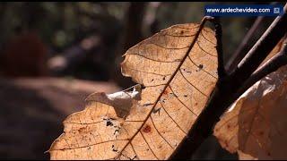 Ardèche - Couleurs d'automne