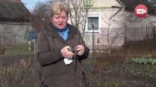 Персональный блог садовода и огородника Светланы Кацаповой 30 выпуск (прививки деревьев)