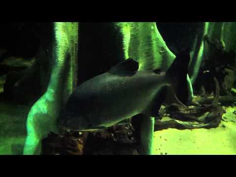 Aquarium - London Zoo (Beautiful Colorful Fishes)