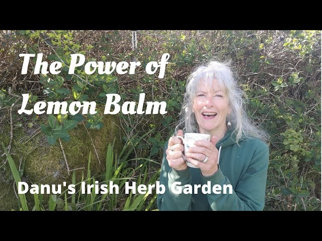 The Power of Lemon Balm