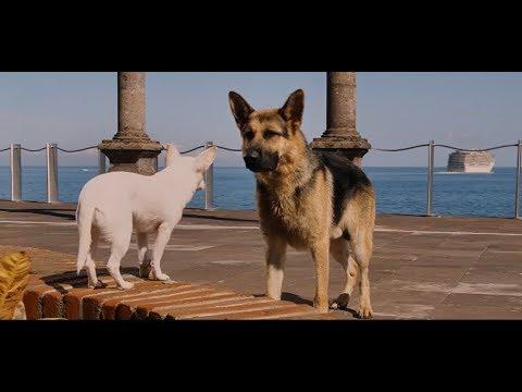 娇生惯养的宠物狗成为一条流浪狗,还好遇到一条牧羊犬的照顾