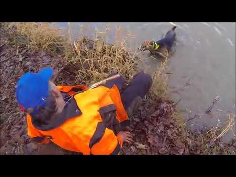 Chasse sanglier 2017 2018, ferme dans la rivière - YouTube