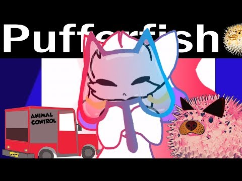 Those Dirty Memers: kittydog | Animation Memes