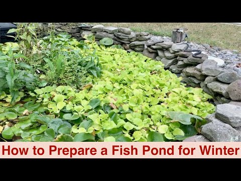 Fish Pond Winterization