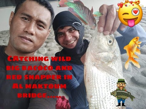 Catching Big Bacoco Fish & Red Snapper.......