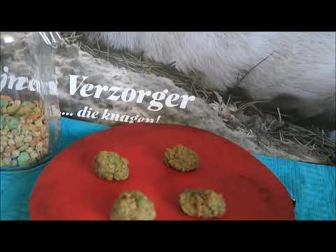 Konijnen Verzorger Channel Vlog #18 – Konijnen Koekjes Bakken met Beaphar