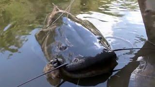 Câu cá thư giãn không ngờ bắt được con cá to như người