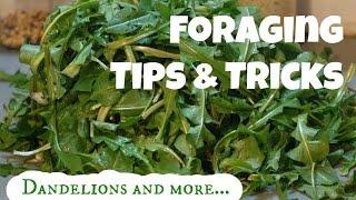 Foraging Tips & Tricks: Dandelion, Dock, Plantain