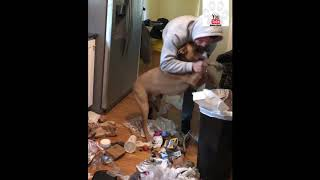 Owner Makes Dog Clean Up His Mess