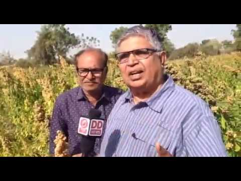Indian supar Agri food in Gujarat.