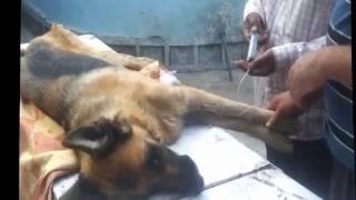 Гуманное усыпление животных