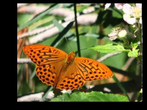 Symmetry in butterflies refutes evolution