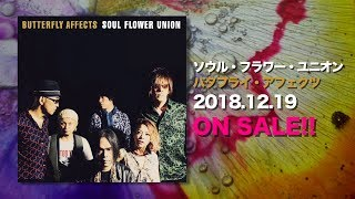 特設サイト:http://www.breast.co.jp/soulflower/special/butterflyaff...