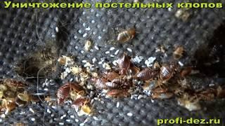видео Уничтожение клопов в Чехове