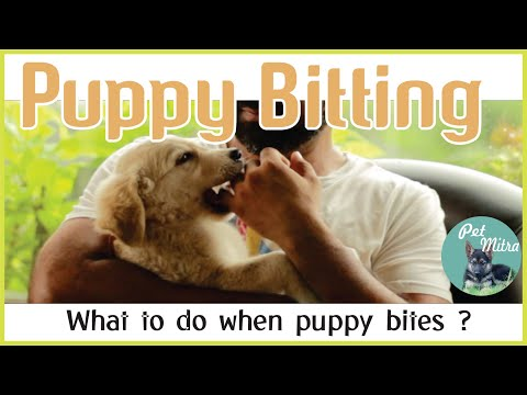 puppy-biting-training-|-how-to-train-puppy-not-to-bite