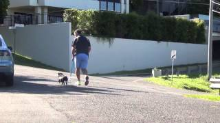 Walk Your Dog With An Electric Remote Training Collar