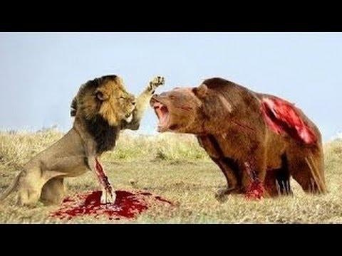 [worldthe animal] Komodo Dragon Attacks Komodo Dragon vs ...