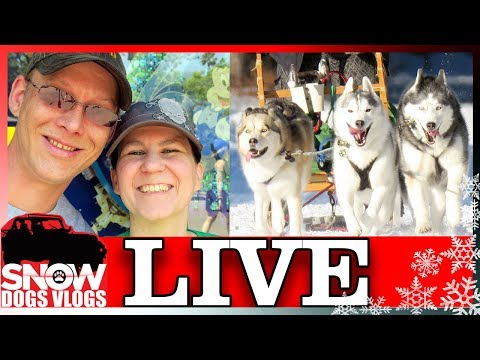 Live With Snow Dogs Vlogs