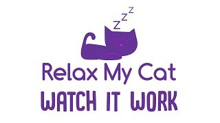 Watch it Work! See Relax My Cat Music and TV in Action!
