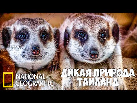 Дикая природа Таиланда (Часть 1 из 2) | Документальный фильм про животных | (National Geographic)