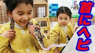 巨大トカゲ抱っこしてきたよ!爬虫類カフェ☆ジュラの杜 himawari-CH