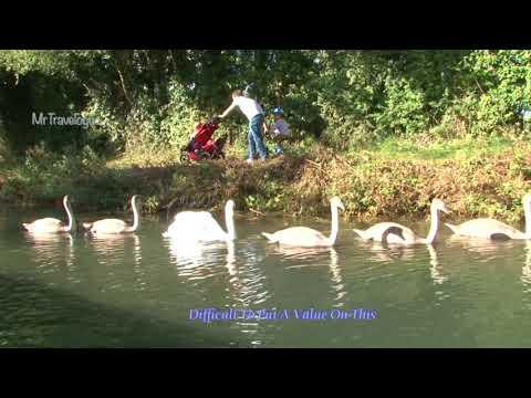 Basingstoke Canal - WildLife - Leisure - Community & Volunteers