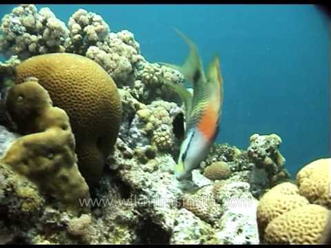 Parrot Fish: The Fish That Can Save Coral Reefs