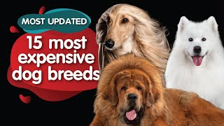 The Most Expensive Dog Breeds On Earth (January 2021)  UNBELIEVABLE Price Tags!