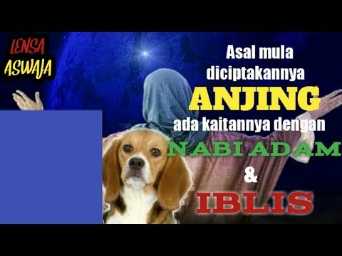 Asal Mula Diciptakannya Anjing Ada Kaitannya Dengan Nabi Adam Dan Iblis