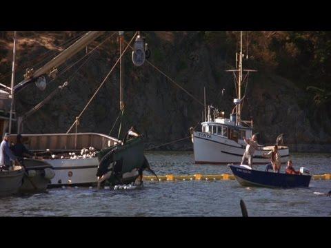 Free Willy 2 Clip - Rescuing Little Spot