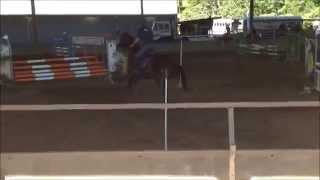 Roxy 2009 WB Mare by Regal Salute FOR SALE