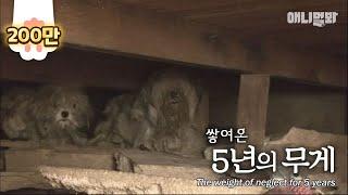 쓰레기 집을 지키는 누더기 커플 ㅣ Two Dogs Protect A Special Belonging In A House Full Of Trash
