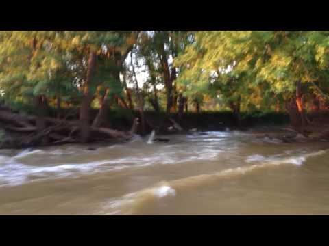 Asian Carp on the Wabash River