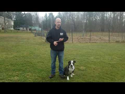 Dog Training Tip: K9 Heights Teaching Side Step Come