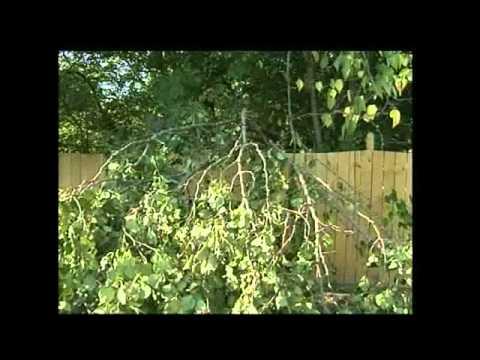 Neighbor S Tree Falls On My Property Victoria