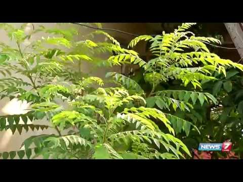 Karuveppilai (curry leaves) - Good medicine to control diabetes| Plant @ your home |Poovali | News7