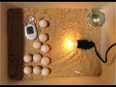 how-to-build-an-incubator,-homemade-incubator-for-chicken-eggs,-incubating-quail-eggs,-hatching-eggs
