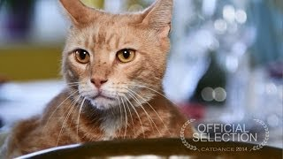 Catdance Finalist 2014: The Clever Cat