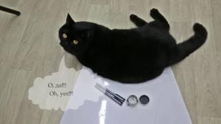 Мистер Плюш и посылка - Mr. Plush and parcel - Британский черный кот