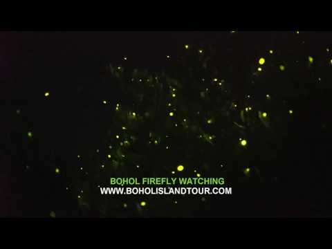 New Bohol Firefly Watching tour Philippines