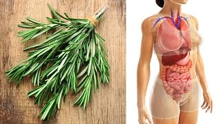 Baixar What is Rosemary Good For? Rosemary Health Benefits