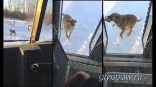 Обыкновенная человечность: вот зачем водитель автобуса каждый день останавливается в этом месте